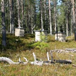 Lumous Lapland Honey Beehives